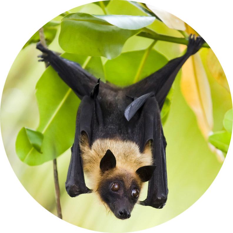 bat-cute